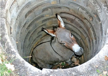 Jackass in a well