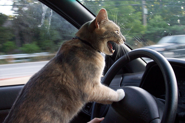 road rage cat driving